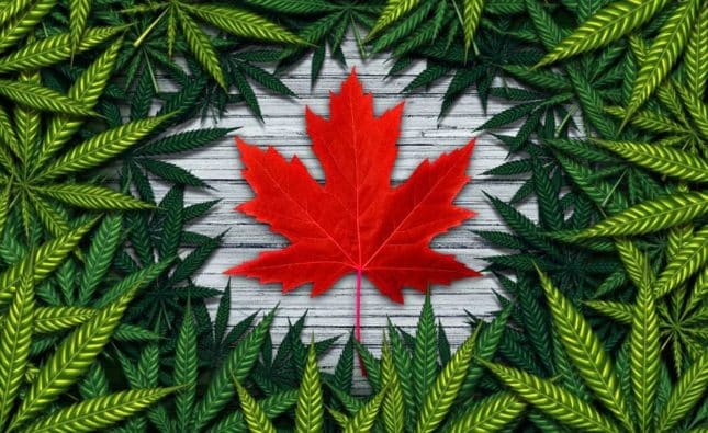 Challenges Facing Canada After One Year of Legalized Cannabis